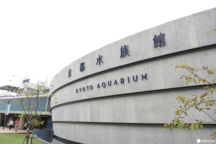 Connected To The Water: Kyoto's Charm-filled Aquarium