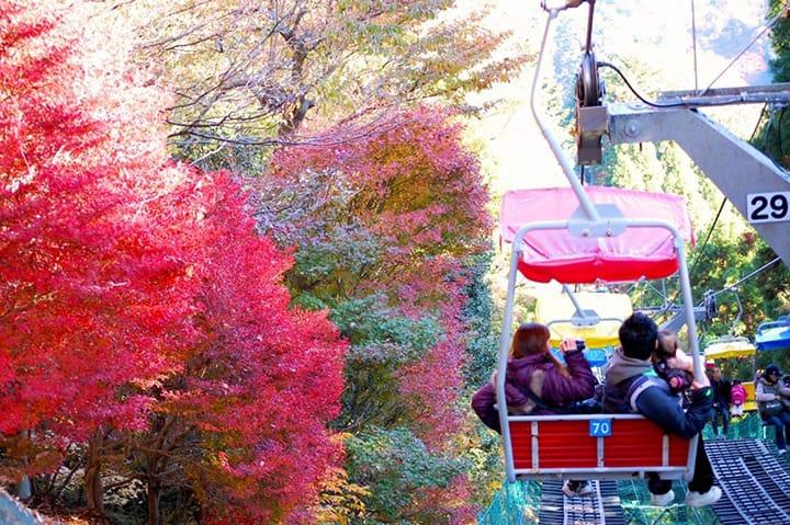 5 Lokasi Wisata Momiji di Alam Terbuka yang Dekat dari Tokyo