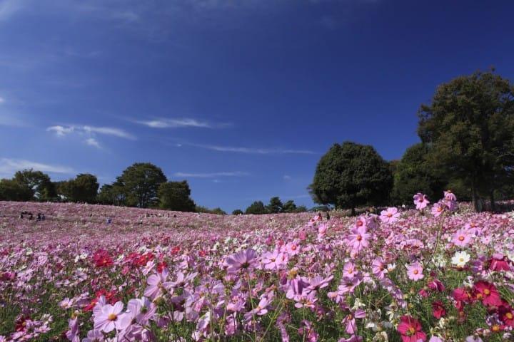季節ごとに咲く花々も魅力!大人から子どもまで楽しめる昭和記念公園