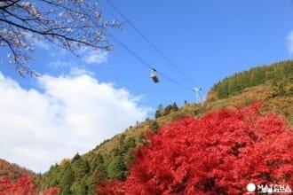 【世界絶景】搭乘別府纜車 來趟空中散步!
