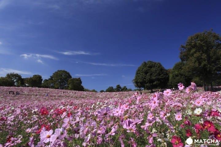 """四季都有花可以赏的""""昭和记念公园"""""""
