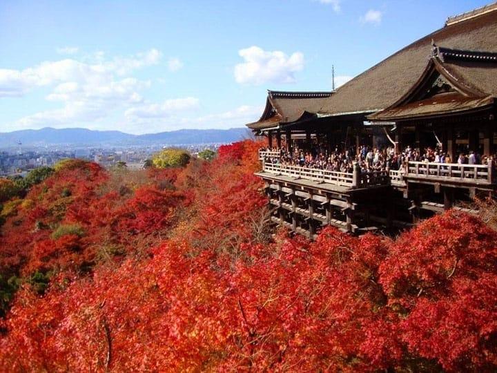 Lịch ngắm lá đỏ trên toàn quốc. Dự báo thời điểm và các địa điểm ngắm lá đỏ!