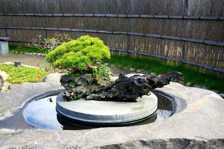 Discover The True Beauty of Bonsai at Omiya Bonsai Art Museum