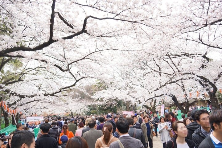Things to Do in Ueno Park, Tokyo: Ueno Zoo, Museums, and Cherry Blossoms