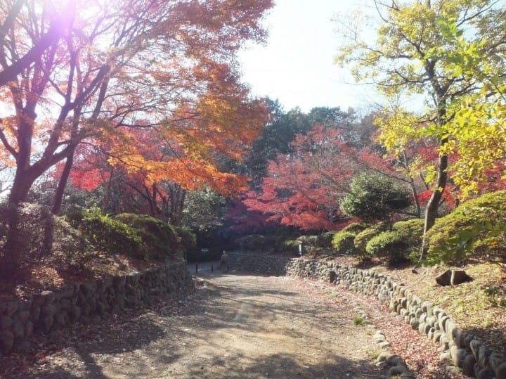4 địa điểm ngắm lá đỏ ở Kamakura (Tsurugaoka Hachimangu, Công viên Genjiyama, Chùa Meigetsuin, Chùa Hasedera)