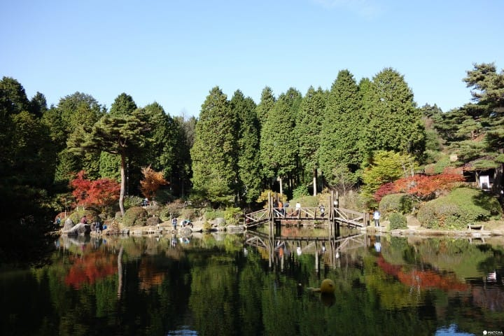 【神戶】不分晝夜賞楓景點:六甲山植物園&六甲山花園