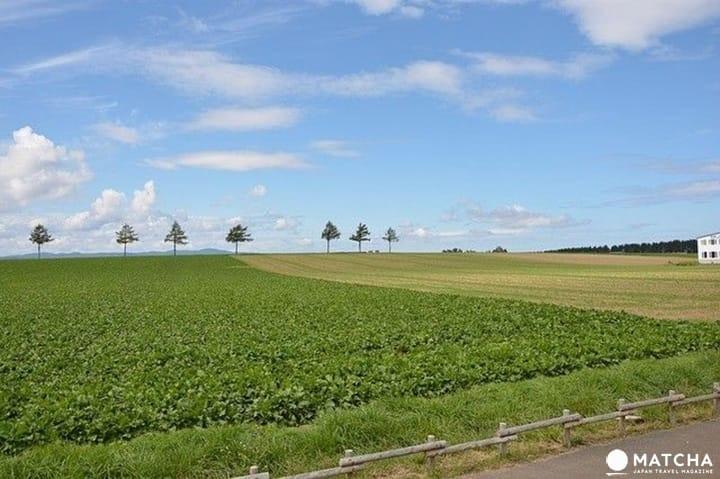 ไกด์นำเที่ยวฮอกไกโด (Hokkaido) จัดเต็มที่เที่ยวขึ้นชื่อ การเดินทาง โรงแรม ของฝาก และสภาพอากาศ