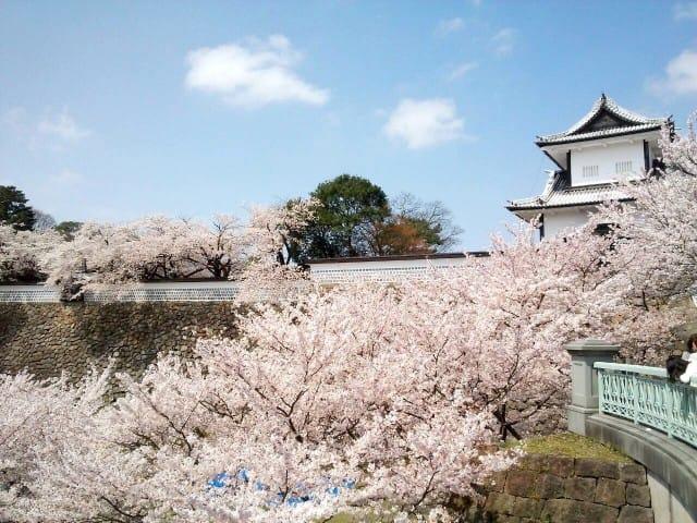 城下町でお花見を楽しもう。金沢の桜スポットまとめ(2018年版)