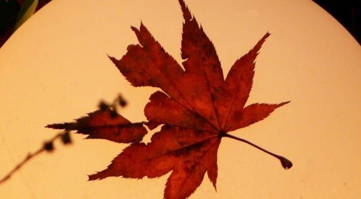 健精神!你聽過這些日本秋天的「季語」與「風物詩」嗎 ?