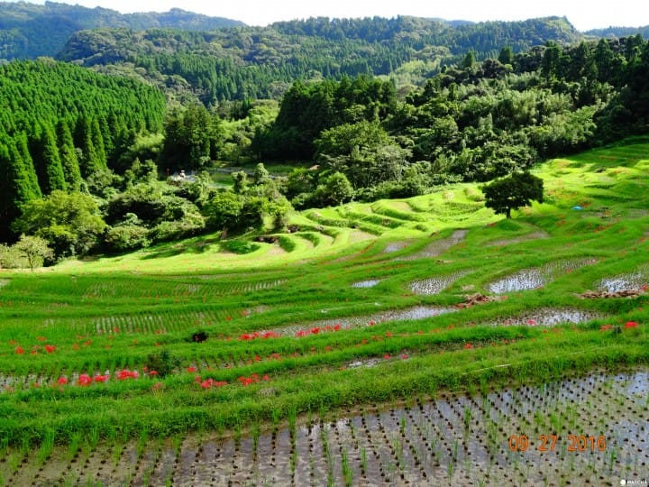 Want To Adopt An 800 Year Old Rice Paddy? The Charm Of Oyama Senmaida