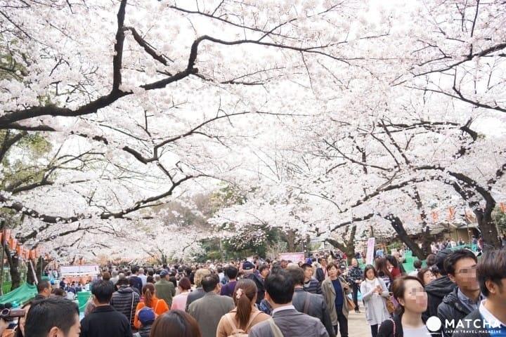 ตะลุย สวนอุเอโนะ (Ueno Park) แบบจัดเต็ม! สวนสัตว์ พิพิธภัณฑ์ วัด ศาลเจ้า
