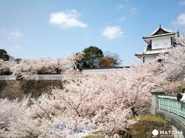 성 아랫마을에서 꽃 구경하기! 가나자와의 벚꽃 명소 모음집