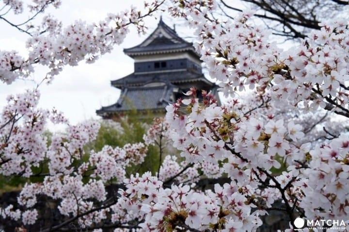 벚꽃 시즌 정보&일본의 꽃놀이 스폿 44선