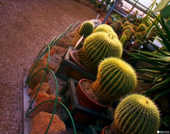 Viewing Exotic Plants in Winter?! Hakodate Tropical Botanical Garden