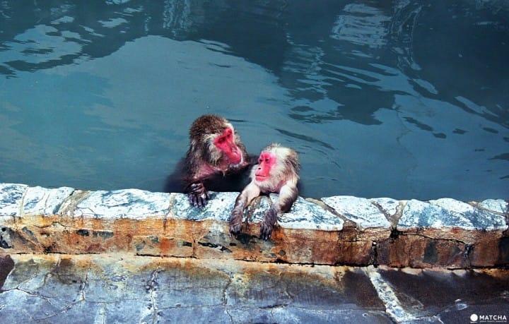 Dile Hola A Los Felices Monos De Nieve De Los Baños De Hakodate