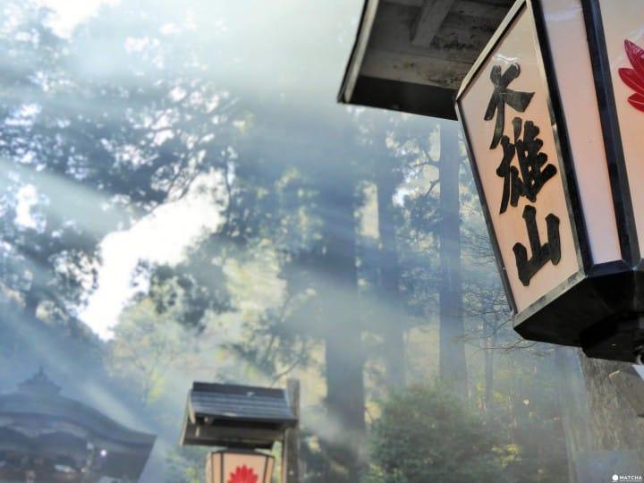 Tur Satu Hari dari Tokyo ke Kuil Daiyuzan Saijoji, Kanagawa!