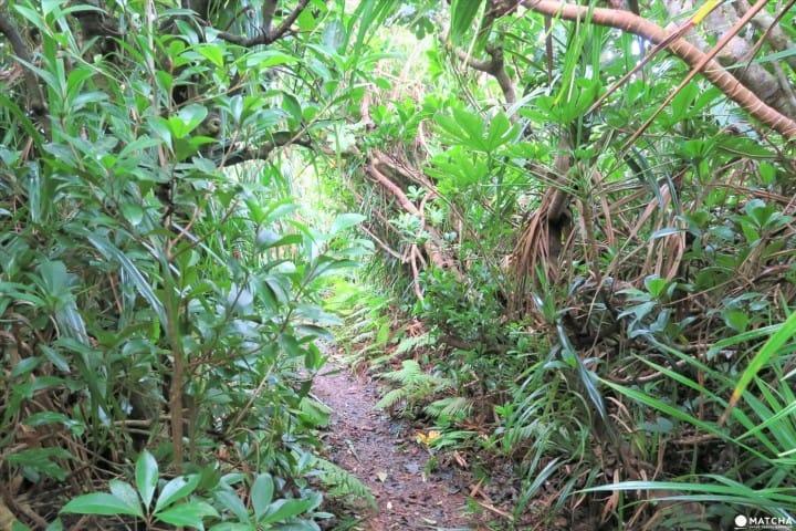 """走进日本""""母岛""""乳房山,领略世界自然遗产小笠原的自然风情"""