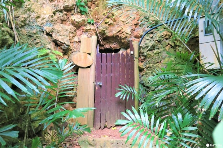 世界自然遺産・小笠原「母島」沖港周辺の歩いて回れるスポットまとめ