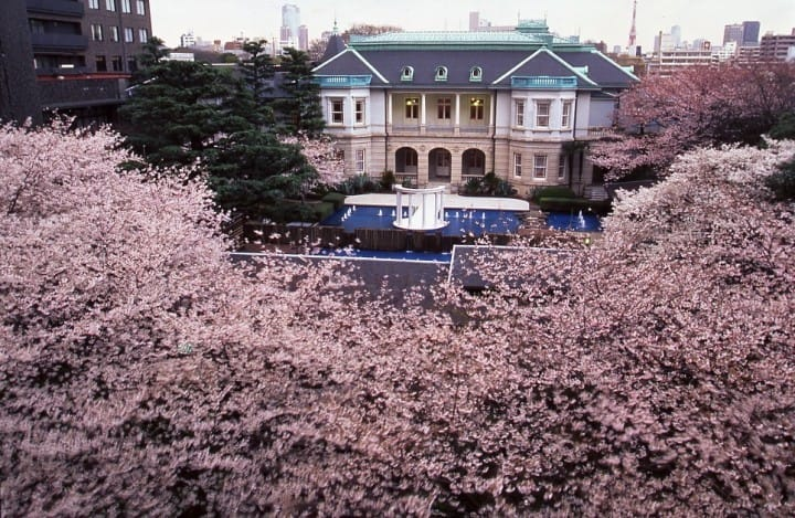 Savoring The Spring: A Cherry Blossom Event For Visitors To Japan