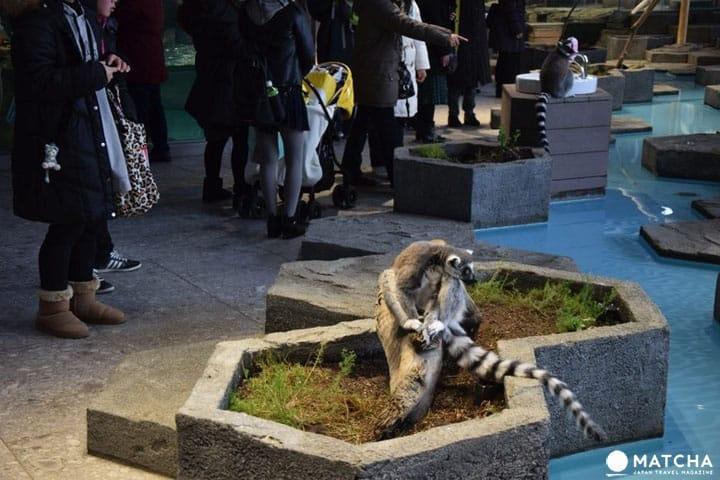 NIFREL In Osaka - Art and Animals Up Close
