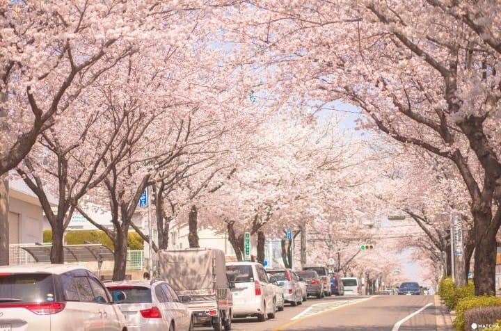 只見在地人不用人擠人的東京私房賞櫻景點9選