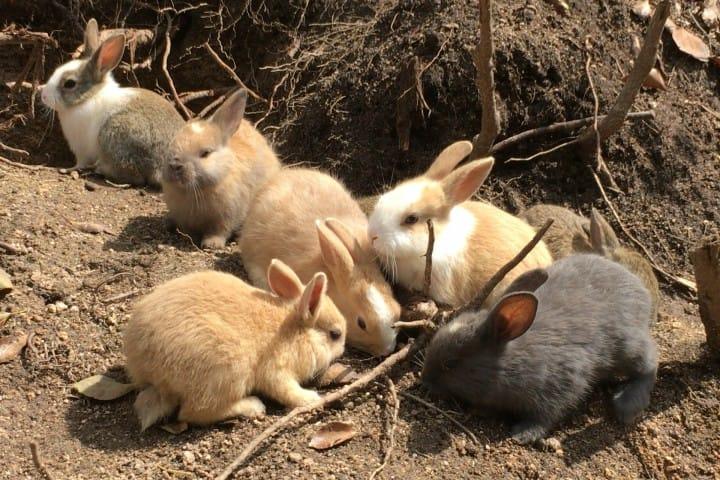 【廣島】想被萌萌力量治癒嗎?千萬別錯過了兔子蹦蹦跳的「大久野島」