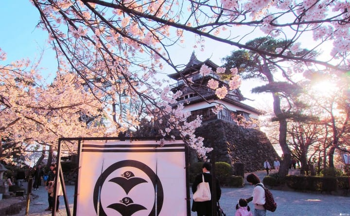 【Ohanami】 5 địa điểm ngắm hoa anh đào ở 3 tỉnh vùng Hokuriku: Ishikawa, Toyama, Fukui