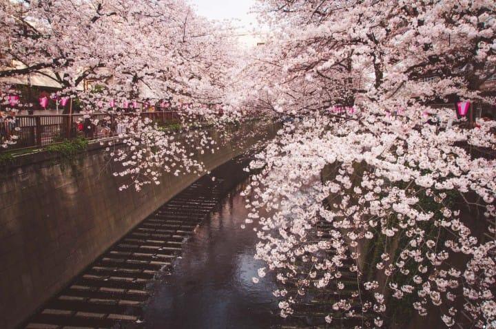 连接涩谷到横滨,「东急东横线」的观光必访景点