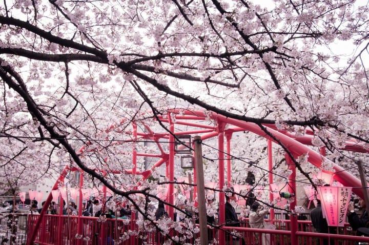 东京赏樱红爆热点:目黑川
