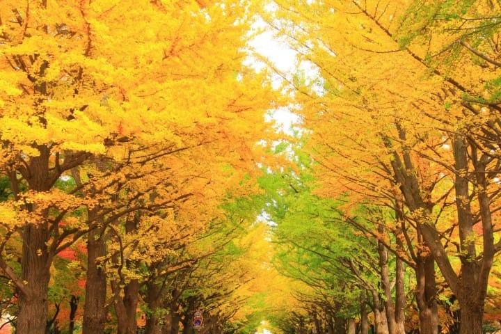【2019年版】北海道絕美紅葉10景點 美到不想離開!