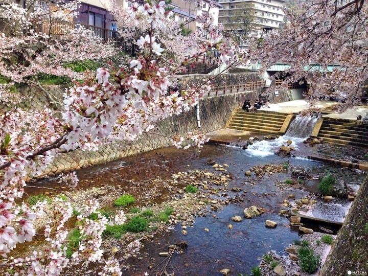 【神戶】賞櫻泡湯一次滿足的「有馬溫泉」療癒之旅