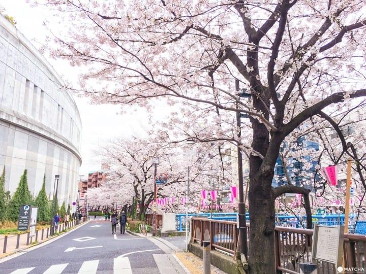 【下書き】東京都心のあまり混んでいない穴場な桜スポット5選