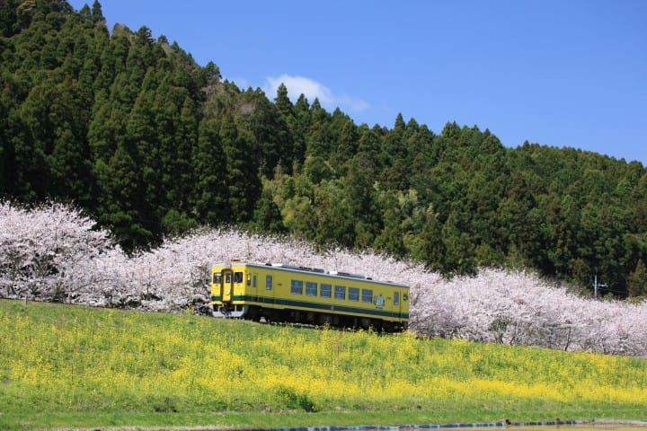 夷隅鐵道春天