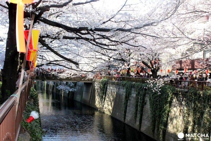 ตระเวนชิมของหวานริมแม่น้ำเมกุโระในฤดูซากุระ (Meguro River)