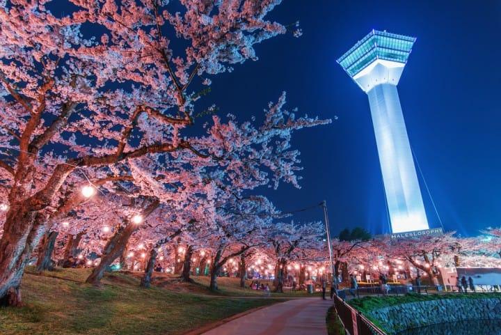 【北海道】错过3月樱花不要紧!北海道追晚樱人气景点5选