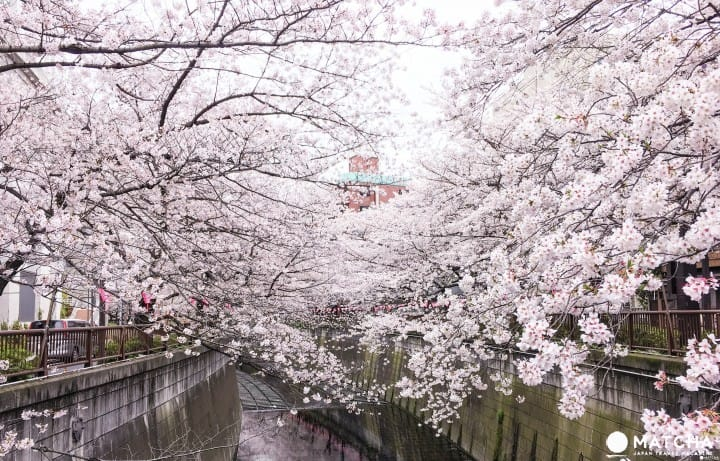 5 Excellent And Less Crowded Cherry Blossom Viewing Spots In Tokyo