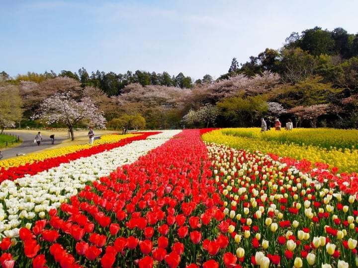 Shizuoka Prefecture: A Flower Tour Around The Lake Hamanako Area