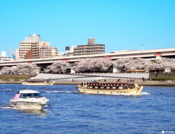 Tokyo's Cherry Blossom Spirit: A Photo Book