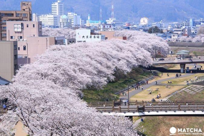 【赏樱】幸福单车悠游福井市区,缤纷春日赏樱美食好去处