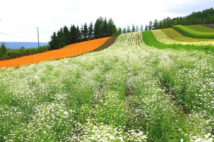 Furano And Biei In Hokkaido – A Summer Escape To A Fairytale World