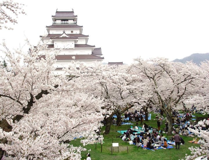 Cherry Blossom Viewing At Two Castles In Fukushima