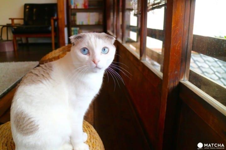 築100年を超える京町家でゆったりと暮らす猫たち@キャットアパートメントコーヒー