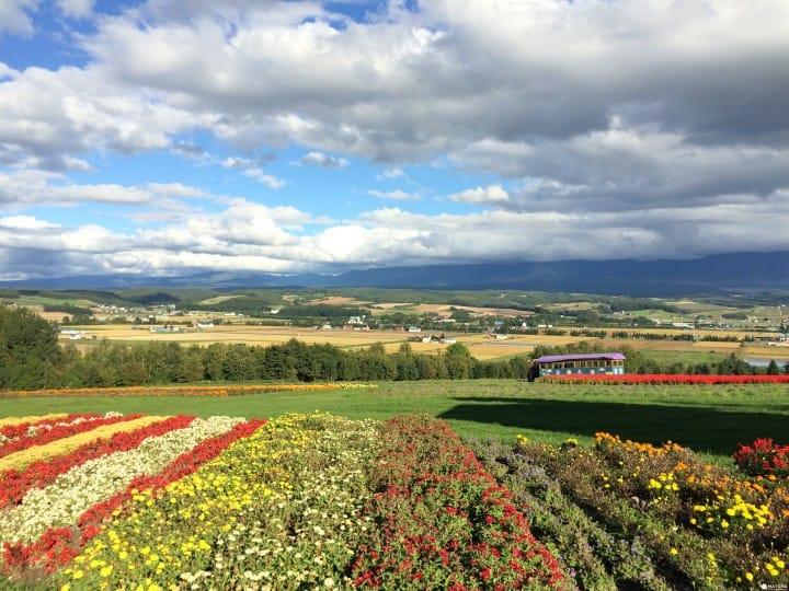 【北海道】要看就要看最值得的!富良野视野最佳花田Flower Land