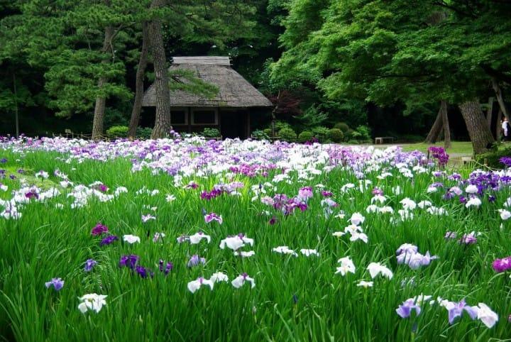 【東京都】到小石川後樂園欣賞當季的花朵~交通・特色・活動〜