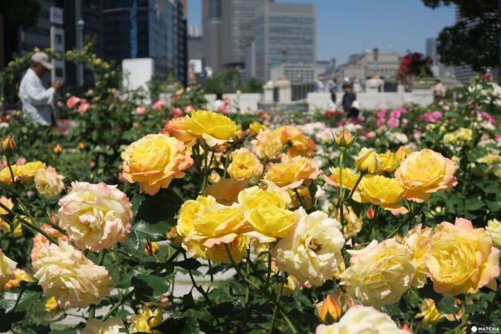 """【大阪】洋溢西方氛围的玫瑰花园 """" 中之岛"""""""