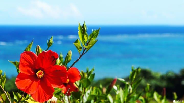 沖繩省荷包一日行程:日幣一萬有找,包住打卡踩點去!