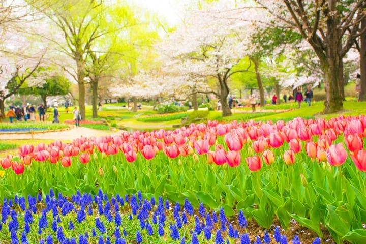【东京都】一年皆可入花丛的昭和记念公园~交通方法和看点介绍