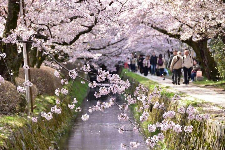 【京都府】來去「哲學之道」看櫻花與紅葉吧!