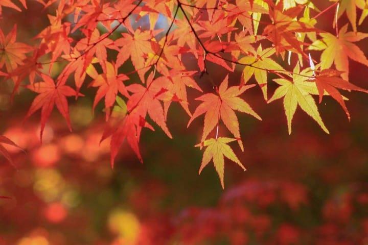 【京都府】桜と紅葉の名所、哲学の道〜アクセス・桜と紅葉の見頃など〜
