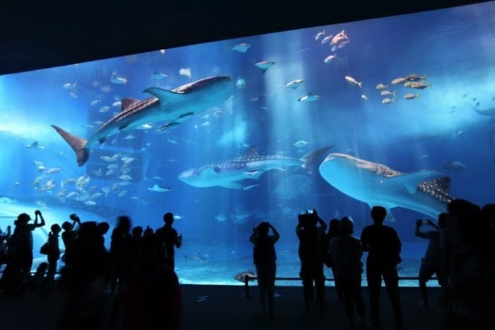 Cool Off This Summer At Aquariums All Across Japan